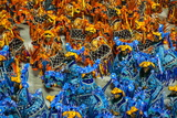 Samba Parade at the Carnival in Rio De Janeiro, Brazil, South America Photographie par Michael Runkel