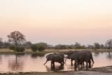 African Elephant (Loxodonta Africana), Okavango Delta, Botswana, Africa Fotodruck von Sergio Pitamitz