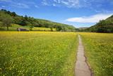 Mark Sunderland - Paved Footpath across Buttercup Meadows at Muker Fotografická reprodukce
