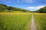 Paved Footpath across Buttercup Meadows at Muker Photographic Print by Mark Sunderland