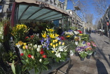 Flower Stall on Las Ramblas, Barcelona, Catalunya, Spain, Europe Photographic Print by James Emmerson