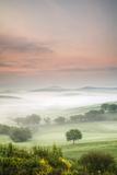 Single Tree at Sunrise Photographic Print by Markus Lange