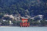 Floating Torii Gate, Itsukushima Jinja Shrine, Miyajima Island Photographic Print by Christian Kober