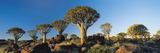 Quiver Trees, Namibia, Africa. Photographic Print by Lee Frost