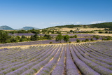 Lavender Fields, Terrassieres, Provence, France, Europe Photographic Print by Sergio Pitamitz