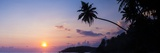 Palm Tree at Sunset on Tropical Mirissa Beach Photographic Print by Matthew Williams-Ellis