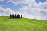 Group of Cypress Trees Near San Quirico Photographic Print by Markus Lange