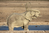 Elephant (Loxodonta Africana) Mudbathing, Etosha National Park, Namibia, Africa Photographic Print by Ann and Steve Toon