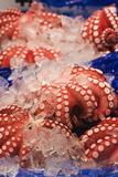 Octopus at Tsukiji Fish Market, Tokyo, Honshu Island, Japan, Asia Photographic Print by Christian Kober