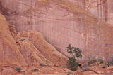 Salmon-Coloured Sandstone Wall with Evergreens Photographic Print by James Hager
