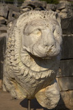 Stone Lion at Temple of Apollo, Didyma, Anatolia, Turkey, Asia Minor, Eurasia Photographic Print by Neil Farrin