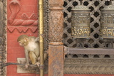 Rhesus Macaque Monkey Baby on Ancient Shrine Photographic Print by Peter Barritt