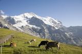 Jungfrau, Kleine Scheidegg, Bernese Oberland, Berne Canton, Switzerland, Europe Photographic Print by Angelo Cavalli