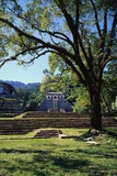 Ancient Mayan Temple, Palenque, Chiapas, Mexico Fotografisk tryk af Rob Cousins