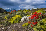 Colourful Moss on an Island in the Beagle Channel Photographic Print by Michael Runkel