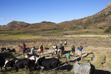 Malagasy People Threshing Rice Near Ambalavao, Madagascar, Africa Photographic Print by Lynn Gail