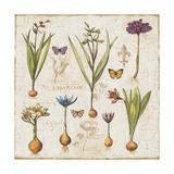 Histoire Naturelle V Prints by  Pela