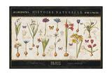 Histoire Naturelle I Premium Giclee Print by  Pela
