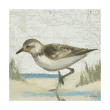 Beach Bird IV Reproduction giclée Premium par James Wiens