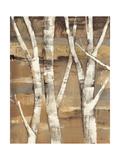 Wandering Through the Birches I Premium Giclee Print by Albena Hristova