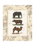 African Animals II Premium Giclee Print by Hugo Wild