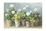 White Geraniums Premium Giclee Print by Danhui Nai