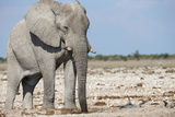Elephant (Loxodonta Africana), Etosha National Park, Namibia, Africa Photographic Print by Ann and Steve Toon