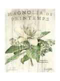 Magnolia de Printemps Premium Giclee Print by Sue Schlabach