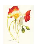 Red and White Icelands I Giclee-tryk i høj kvalitet af Shirley Novak