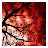 Ciel de feu Affiches par Taylor Greene