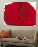Lovely Red Rose Poster by Yvonne Poelstra-Holzaus