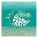 Puff Fish Prints by Albert Koetsier