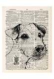 Jack Russel Posters by Tina Carlson