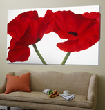 Loving Poppies Print by Yvonne Poelstra-Holzaus