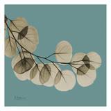 Eukalyptus Plakater af Albert Koetsier