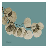 Eucalyptus Prints by Albert Koetsier