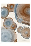 Tree Ring 16 Poster by Albert Koetsier