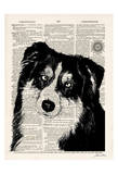 Border Collie Prints by Tina Carlson