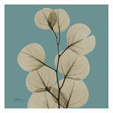 Eucalyptus Posters par Albert Koetsier