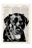 Rottweiller Posters by Tina Carlson