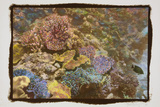 Coral Reef 1 Photographic Print by Theo Westenberger