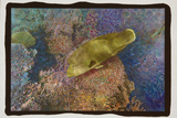 Coral Reef 2 Photographic Print by Theo Westenberger
