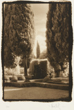 Poplar Trees, Italy Photographic Print by Theo Westenberger