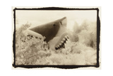 Shark Entryway,Australia Photographic Print by Theo Westenberger