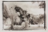 Pryamid and Palms, Guatemala Photographic Print by Theo Westenberger