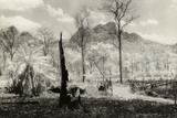 Plantation Clearing, Mae Hong Song, Thailand Photographic Print by Theo Westenberger