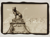Guardian Lion Photographic Print by Theo Westenberger