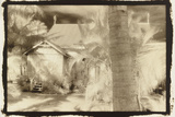 Church behind the palms, Australia Photographic Print by Theo Westenberger