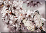 Butterfly Branch Canvas with Glitter Stretched Canvas Print