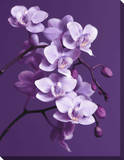 Purple Orchid Canvas Gallery Wrapped Canvas
